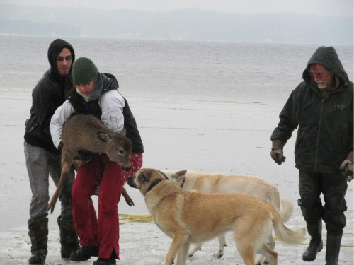 Amal (second from left) lifting the deer, accompanied by her brother Jihad, curious canines Mika and Odin, and father Oussama. Photo by her mother, Leila Ghobril.